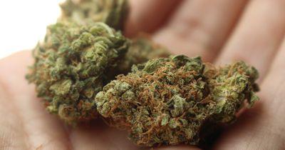 Diese deutsche Stadt möchte jetzt Cannabis umsonst verteilen