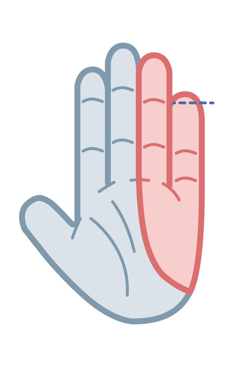 Dein kleiner Finger ist relativ lang im Verhältnis zu deinem Ringfinger.