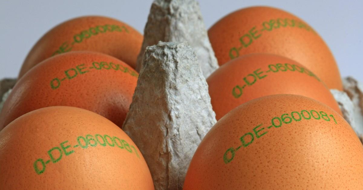 Der prüfende Blick in den Eierkarton an der Kasse