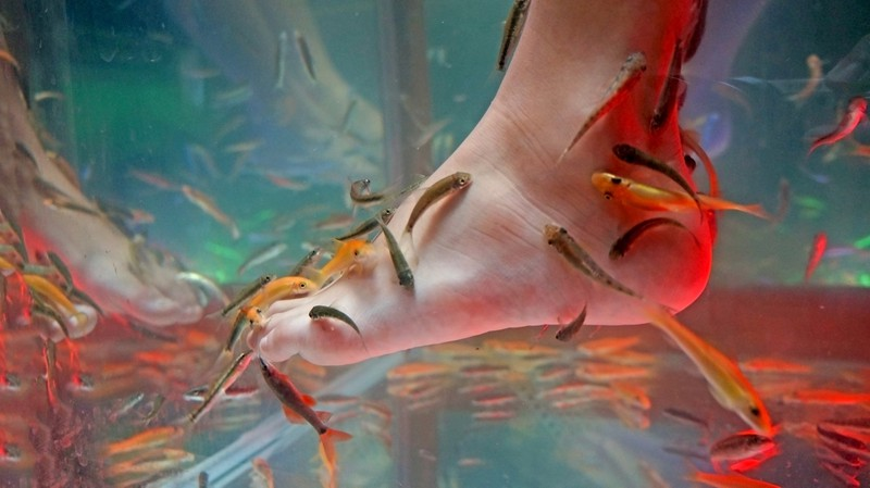Zu sehen ist ein Fuß während einer Fisch-Pediküre.