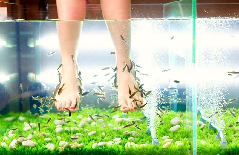 Zu sehen sind Füße, die in einem Auqarium sind und es geht um Fisch-Pediküren.