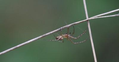 Große Spinnen vermehrt in deutschen Haushalten gefunden
