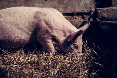 """Warum für Fleischersatz-Produkte mehr Tiere sterben als für """"Original""""-Fleisch"""