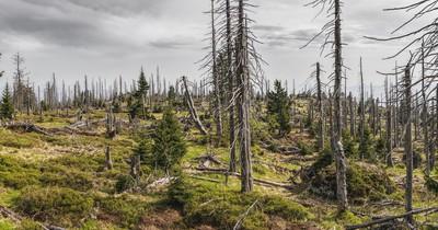 Katastrophal: Das neue Waldsterben in Deutschland
