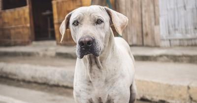 Tierquälerei schockiert Indien