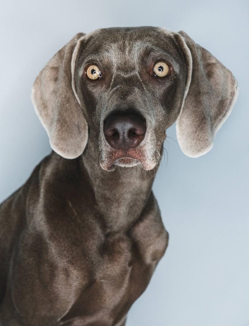 Aufmerksame Hunde lieben ihr Frauchen und Herrchen.