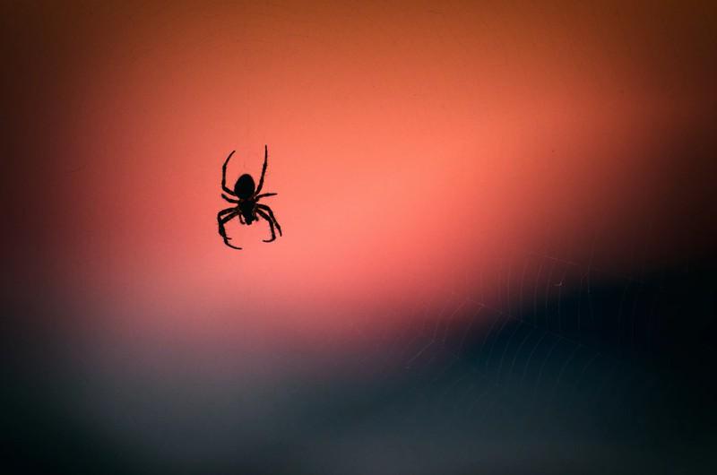 Um diese Uhrzeit krabbeln Spinnen in deiner Wohnung