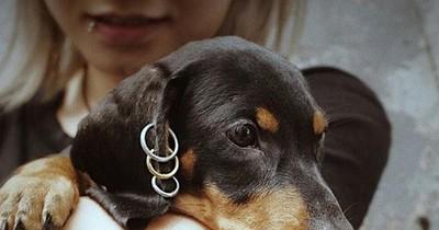 Neuer Trend: Piercings für Hunde