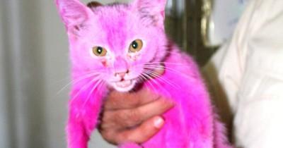 Verkäufer färbt Katze pink