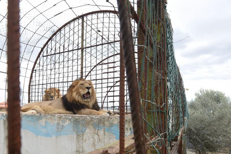 Tiere aus Europa's schlimmstem Zoo endlich befreit