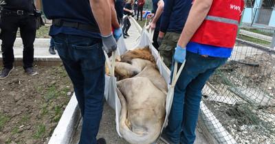Tiere aus Europas schlimmstem Zoo endlich befreit
