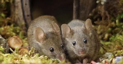 Mann entdeckt Mäuse-Familie in seinem Garten und baut ihnen ein kleines Dorf
