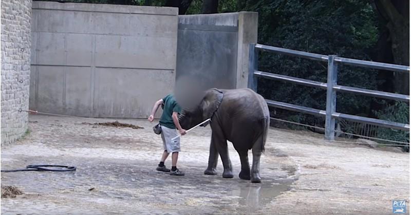 Tierquälerei in Wuppertaler Zoo: Elefanten werden gequält