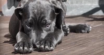 Head Pressing bei deinem Haustier: In diesem Fall solltest du sofort handeln
