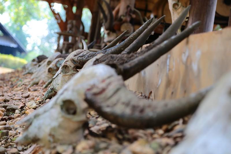 Büffelmozzarella – blutiges Luxusgut