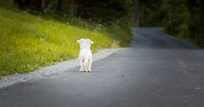 Hund wartet seit 80 Tagen auf sein verstorbenes Frauchen