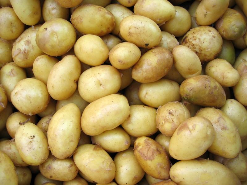 Kartoffeln werden jetzt viel teurer:
