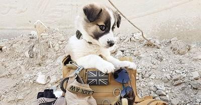 Soldat rettet Hund in Syrien: Dieser legt dann fast 5000 Kilometer zurück