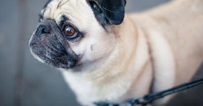 Tierärzte warnen jetzt davor: Das ist besonders qualvoll für Tiere