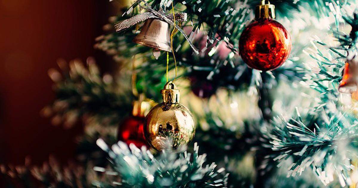 Mit dem Weihnachtsbaum kommen jede Menge Insekten