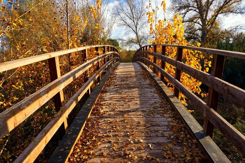 Auf der Overtoun Bridge solltest du eher nicht mit deinen Tieren spazieren gehen.