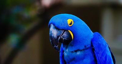 Papagei bleibt allein zuhause – und gibt Online-Bestellung auf