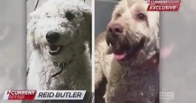 Sie brachte ihren Hund zum Friseur - 2 Jahre später bemerkte sie den fatalen Fehler