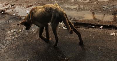Tierquäler sollen in den USA wie Schwerverbrecher bestraft werden