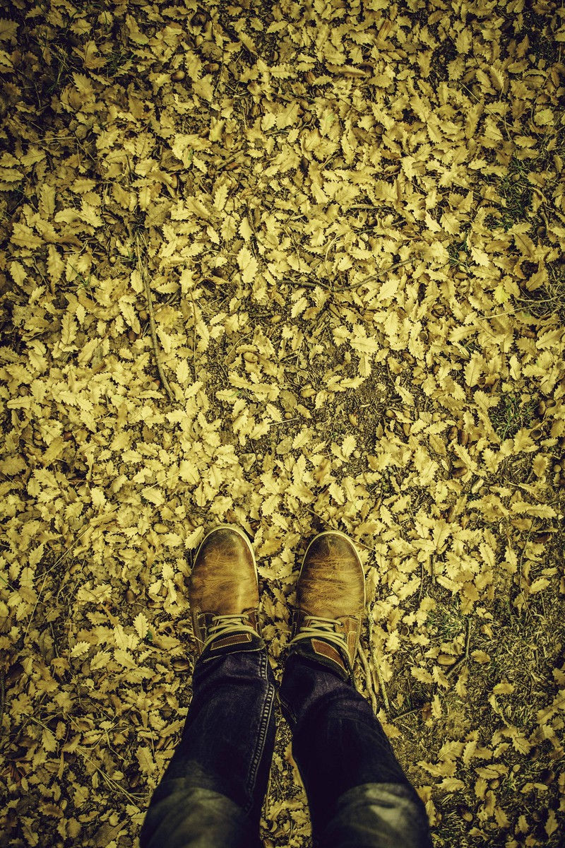 Ein Waldboden, der von einem unsichtbaren Wanderer durchlaufen wurde