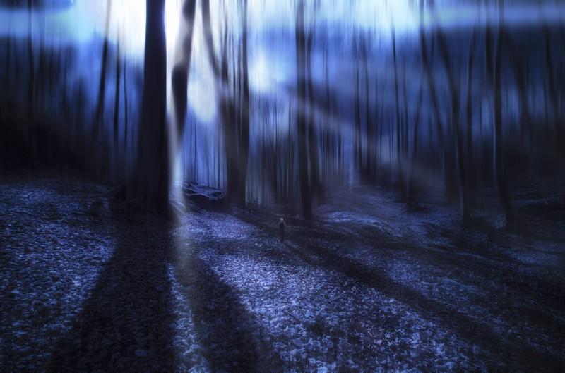 Ein gruseliger Wald in dem eine Gestalt oder ein Tier gruselig hin und her springt