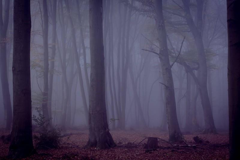 Ein Mensch sah einmal im Wald eine hässliche Fratze, ein gruseliges Gesicht im Baum