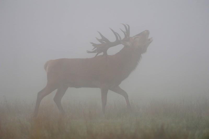 Menschen, die campen, sehen ab und zu auch einen Hirsch im Wald