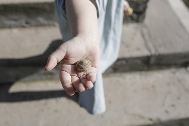 Eine Person hält ein Schneckenhaus in der Hand