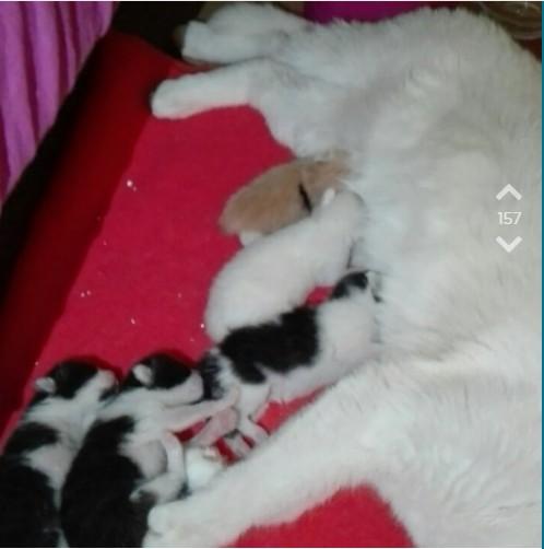 Die Katze von OJ's Mitbewohnerin bringt ihre Babies zur Welt, aber OJ weiß nicht, was zu tun ist
