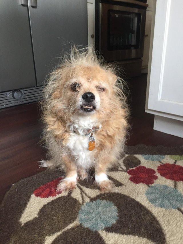 Du hattest einen schlechten Tag? Der Hund hatte einen noch schlechteren Tag!
