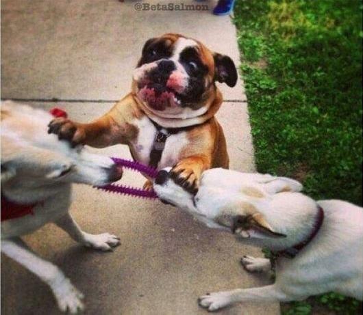 Ein Bild, dass Streitereien unter Geschwistern am besten beschreibt.