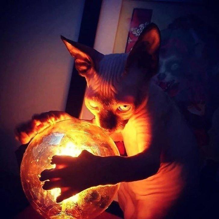 Ob wir die Zukunft von einer merkwürdigen Katze vorher gesagt bekommen wollen?