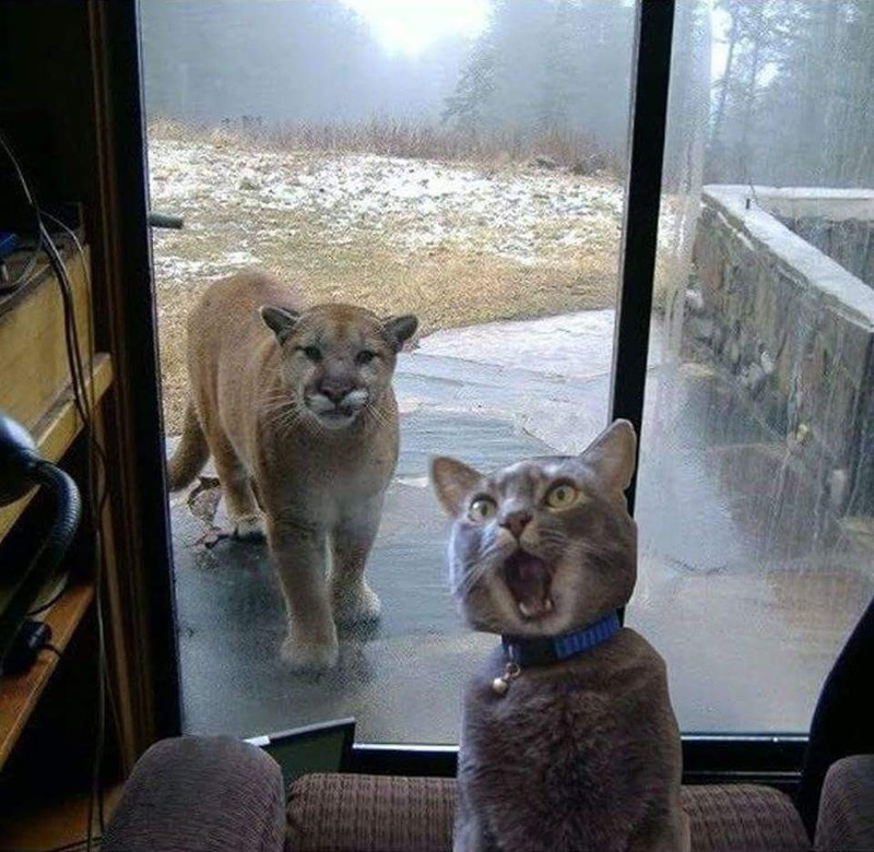 Wenn die Verwandtschaft zu Besuch kommt und man einen riesigen Schrecken bekommt.
