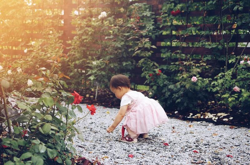 Auf diesem Bild sieht man ein kleines Blumenmädchen, das Blüten streut.