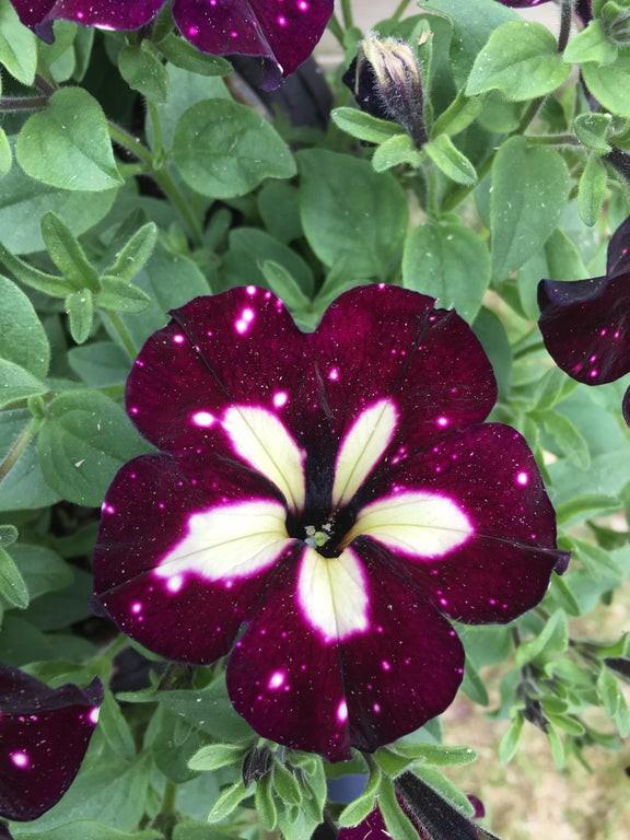 Man sieht eine optische Täuschung in Form einer Blüte, auf der eine Galerie zu sehen ist.
