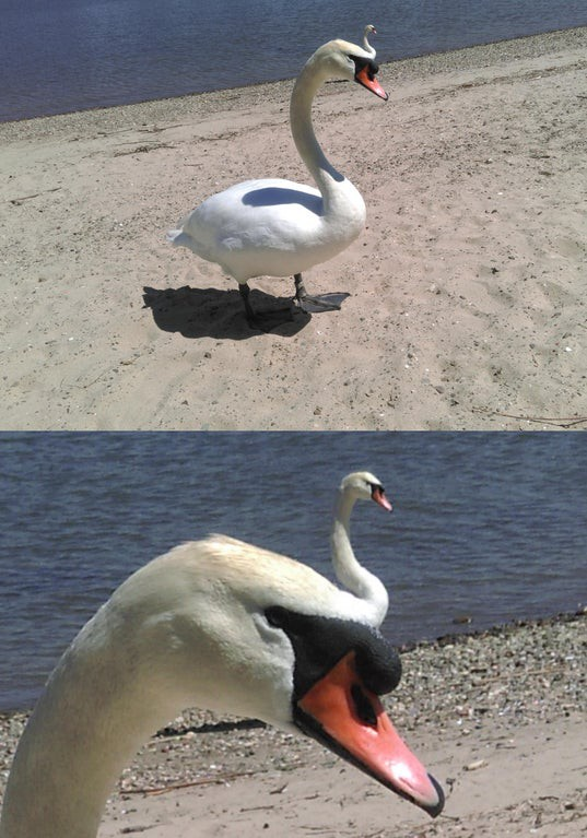 Man sieht eine optische Täuschung in Form eines Schwans.