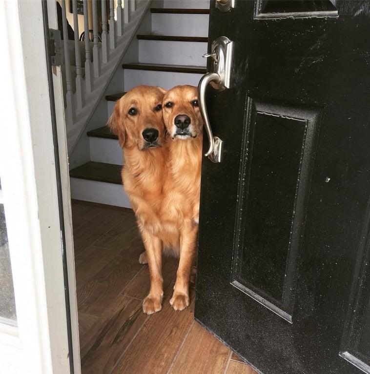 Man sieht eine optische Täuschung in Form von zwei Hunden.
