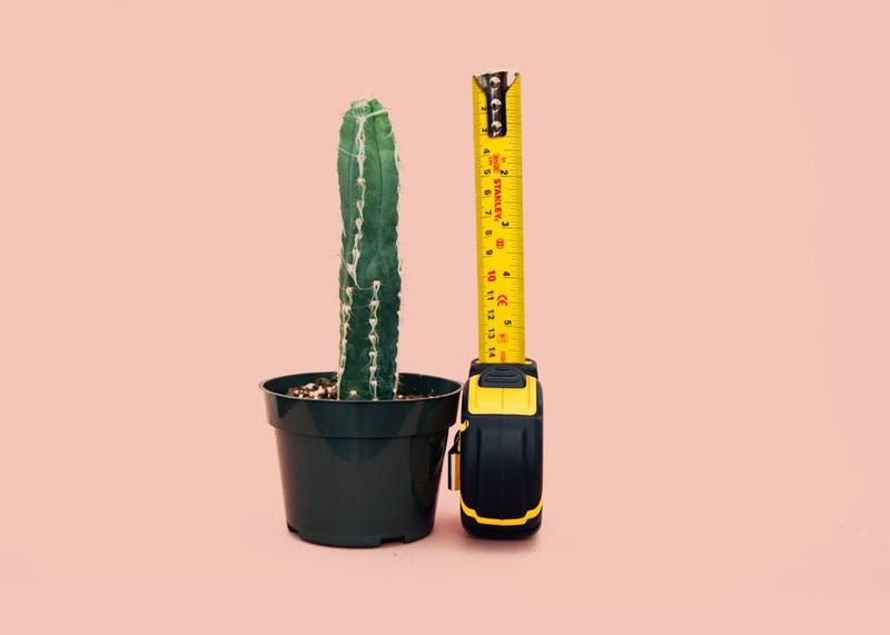 Dieses Bild zeigt einen Kaktus und steht symbolisch für die Patienten-Geschichte.