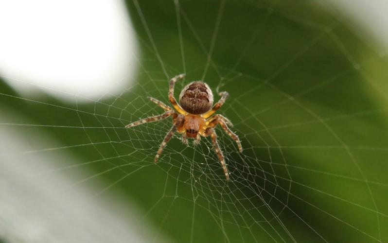 Man sieht eine Spinne und es geht um die Uhrzeit, in der Spinnen hervorkriechen.