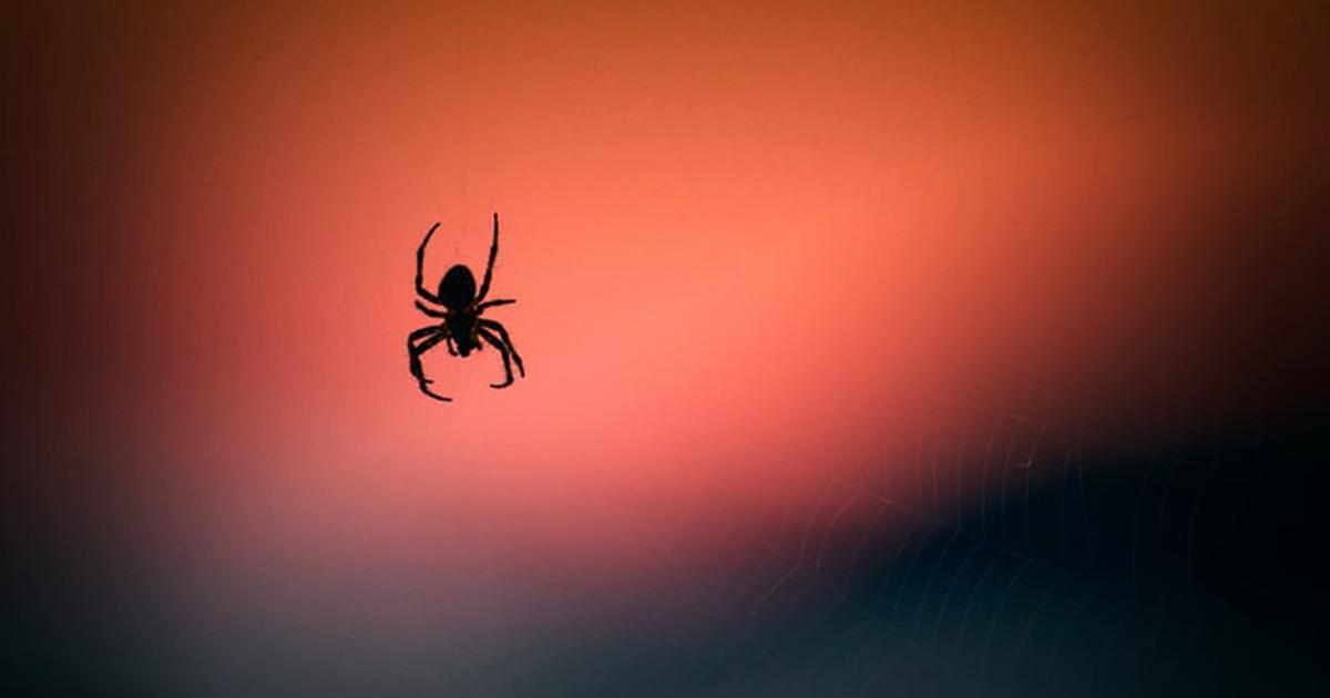Studie deckt auf: Zu dieser Zeit sollen Spinnen hervorkriechen