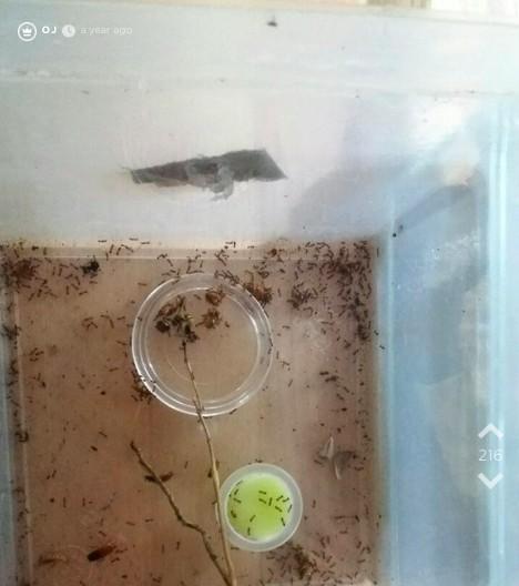 Bild einer Ameisenzucht von Jodel