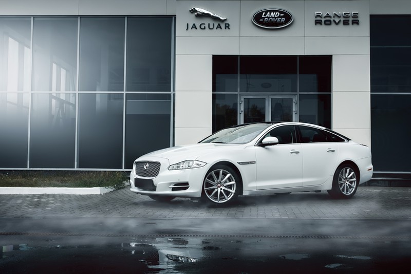 Ein weißer Jaguar