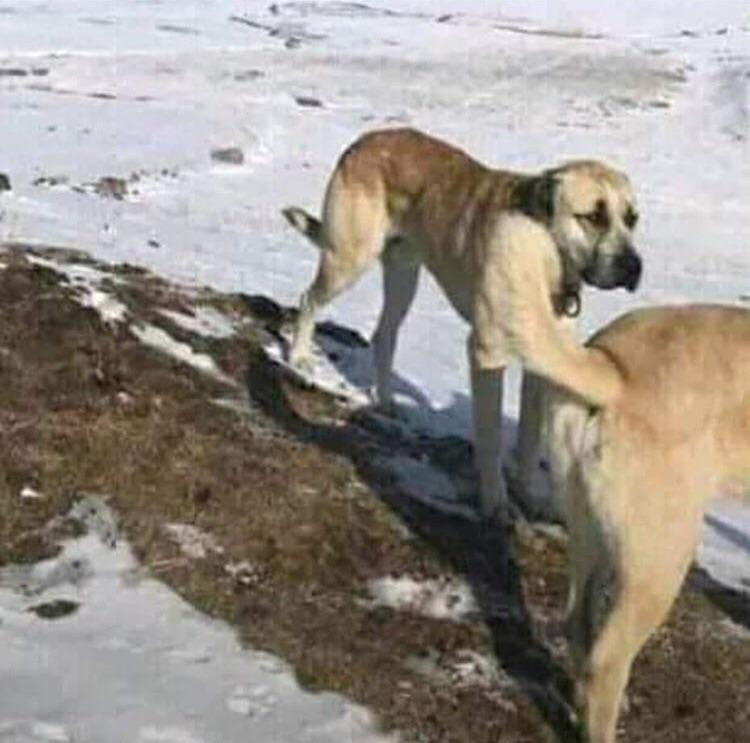 Zwei Hunde machen komische Sachen