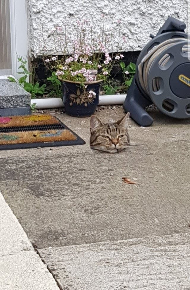 Eine Katze unter einem Läufer