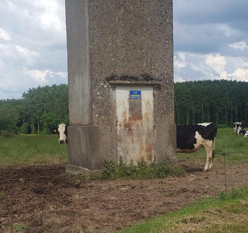 Es scheint, als sieht man die längste Kuh der Welt